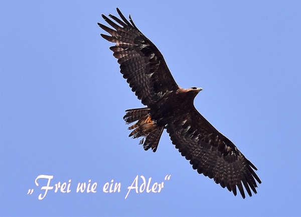 Hans Bergmann / 13__frei_wie_ein_adler_ / Zum Vergrößern auf das Bild klicken